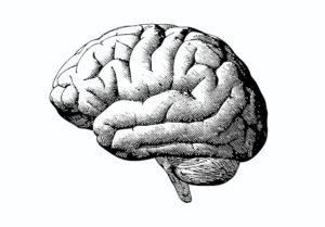 testez votre cerveau calculez l ge de votre cerveau testez votre cerveau. Black Bedroom Furniture Sets. Home Design Ideas